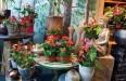 Каттлея - особенности цветка, как заставить его зацвести, выращивание, выбор почвы и лечение болезней