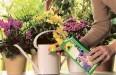 Калийные удобрения для подкормки растений