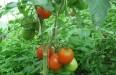 Полив в теплице: системы орошения растений