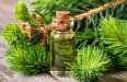 Масло можжевельника – свойства и применение эфирного продукта