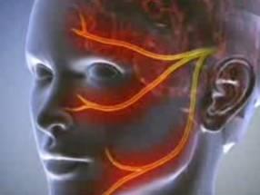 Нервно-нейронные связи