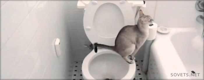Как научить кошку ходить на унитаз