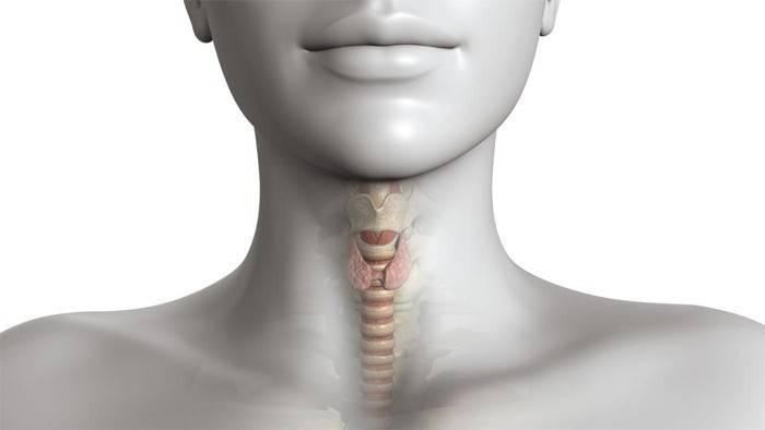 Щитовидка у женщины