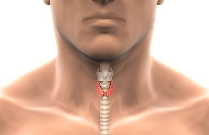 Щитовидка у мужчины