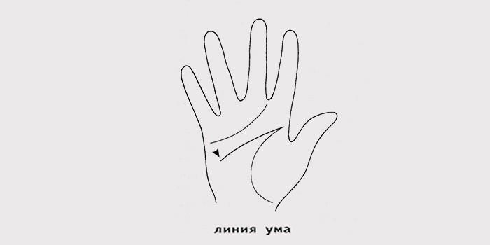 Линии на руке, что они означают: толкование хиромантического гадания