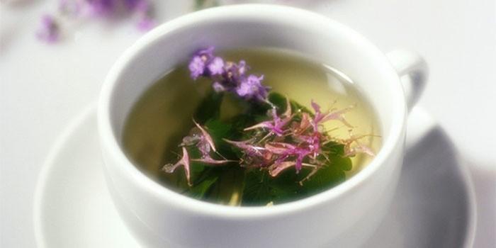 Иван-чай - полезные свойства и противопоказания травы, отзывы