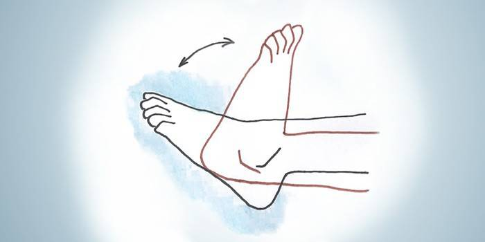Выполнение сгибаний и разгибаний голеностопного сустава